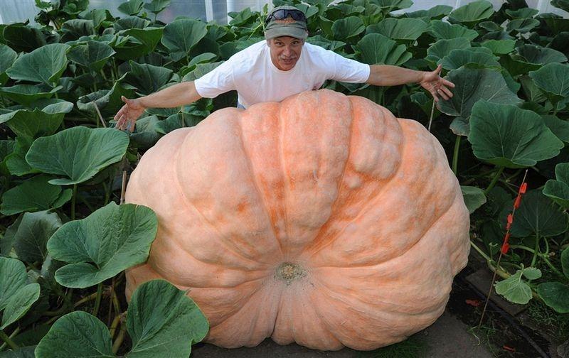 alaska-giant-vegetables-8[2]