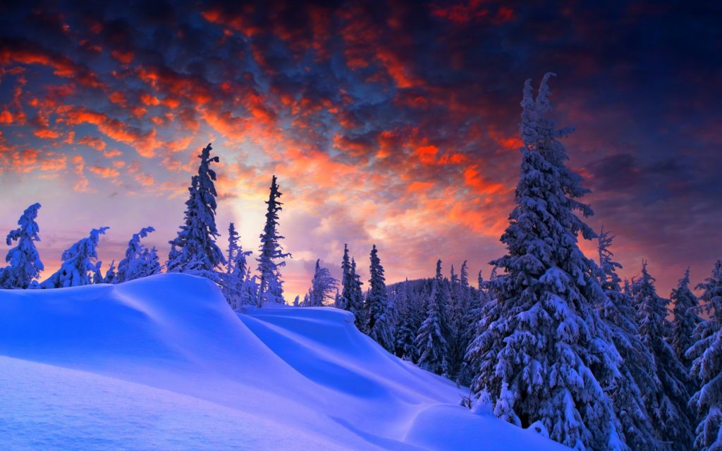 winter-1680x1050-pine-trees-snow-covered-sunset-4k-5039